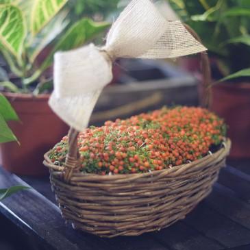 Nuestras flores y plantas: Nertera