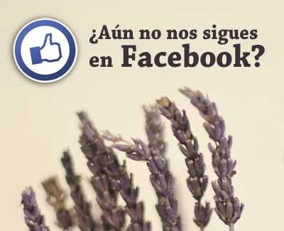 flores FB