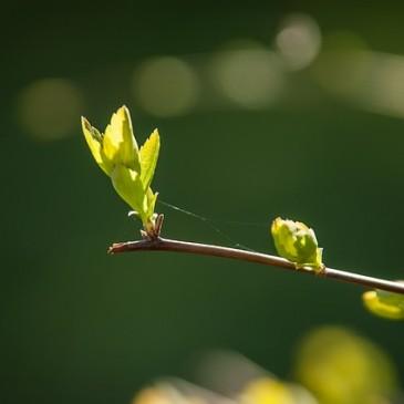 Las 5 claves para el crecimiento de las plantas