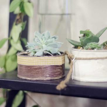 5 consejos para cuidar tus cactus de interior